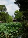 Suzhou: Garden with lotus & tower